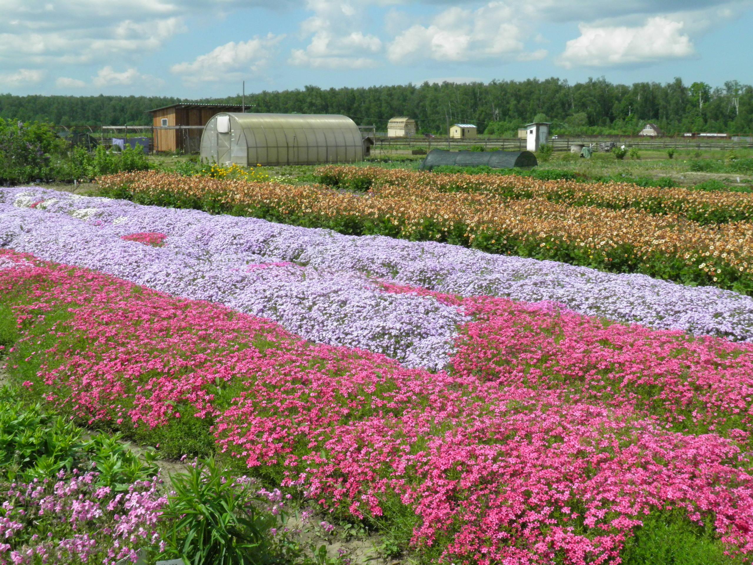 Cvetochnaja stranarf